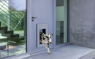 LieberLieber Software: Next-generation doors for cats and dogs